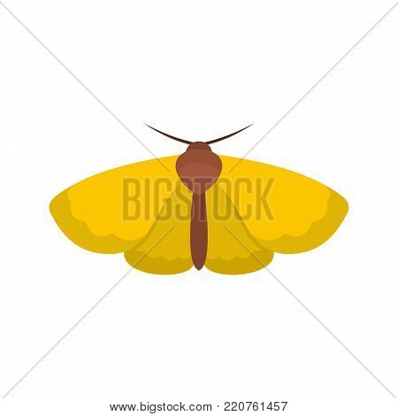 Moth icon. Flat illustration of moth vector icon isolated on white background