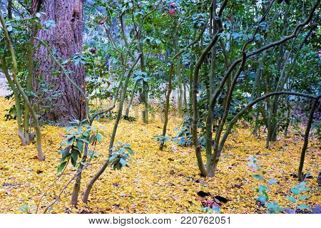 Whimsical forest including lush green plants and trees with yellow leaves on the forest floor during autumn foliage taken in the North American Deciduous Forest