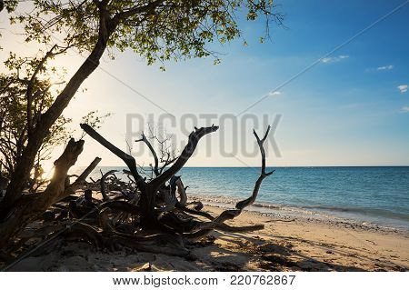 Dried branches on the beach of Cayo Jutias near Vinales (Cuba)