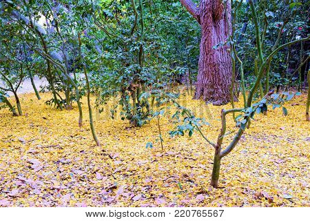 Whimsical woodland including lush green plants and trees with a forest floor covered in yellow leaves during autumn foliage