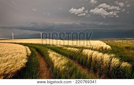 Wind Farm Storm in Saskatchewan Canada,Wheat Field