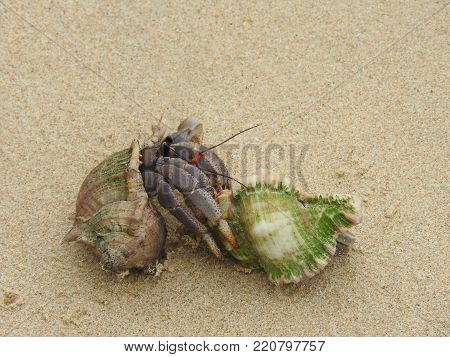 Hermit Crab on the sandy beach of Khao Lak
