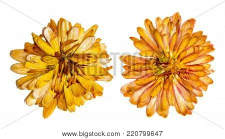 Oil Draw Illustration Of Set Dry Pressed Scattered Plants With Descended, Dangling Orange Leaves, Is