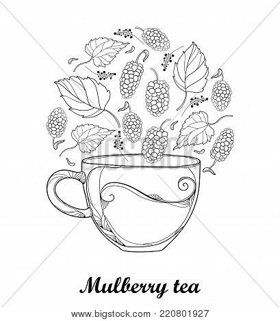 Vector contour transparency cup of Mulberry or Morus herbal tea isolated on white background. Floral elements with outline Mulberry berry and leaves in black for fresh fruit design and coloring book.