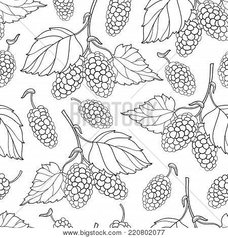 Vector seamless pattern with outline Mulberry or Morus bunch with berry and leaf in black on the white background. Floral pattern with contour Mulberry fruit for summer design or coloring book.
