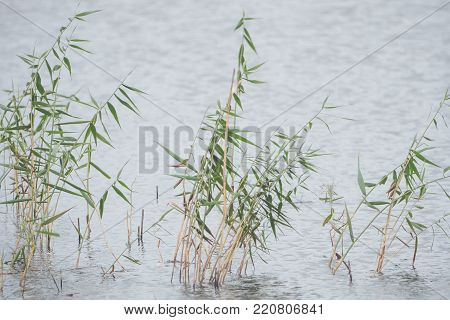 Lake in the background, blades of grass in the foreground