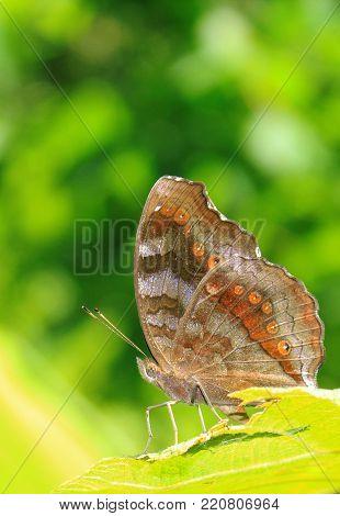 Butterfly on flower. Butterfly in tropical garden. Butterfly in nature.
