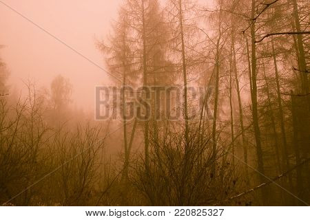 Post apocalyptic forest after a nuclear war