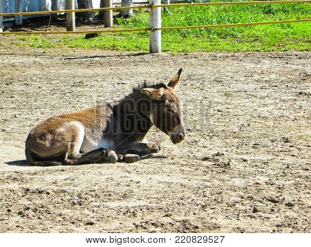 Young donkey in the zoo on summer