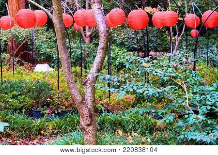 January 1, 2018 in La Canada, CA:  Japanese red lantern decorations surrounded by lush green plants and trees taken at the Descanso Gardens in La Canada, CA where people can visit and walk around this manicured Japanese Zen Garden with decorative lamps