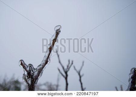 Branch Fully Encapsulated In Glaze