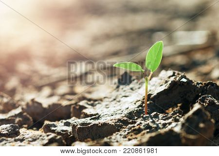 young plant growing in soil arid with sunshine
