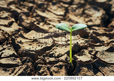 young green plant growing in soil arid