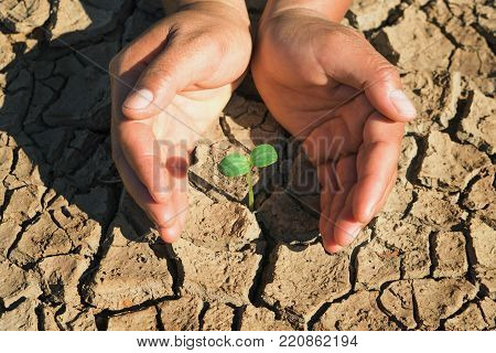 two hand protection young plant growing in soil arid concept eco