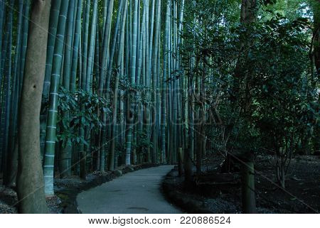A bamboo garden in Hokokuji Temple also known as Take-dera - bamboo temple, in Kamakura, Japan