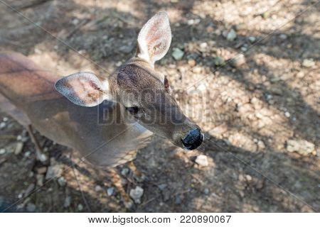 Close-up of cautious and cute roe deer.