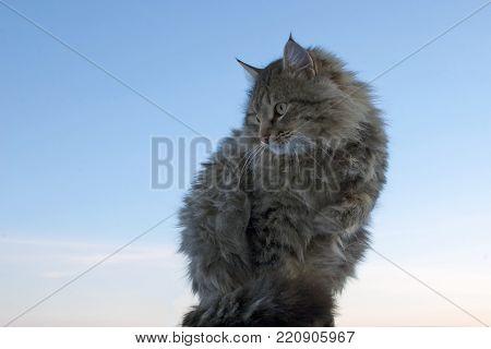 Fluffy Street Cat