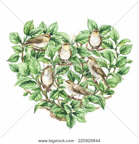 Watercolor painting.  Hand drawn animalistic illustration. Aquarelle sketch of forest birds sitting on green tree branches. Foliage heart shape and  songbirds isolated on white.