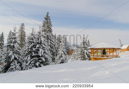 Tall fir trees covered with white snow and a small wooden house. Winter bright daytime landscape. poster