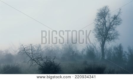 Trees on white background in a foggy day.