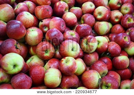 Fresh picked apples background in the harvest season