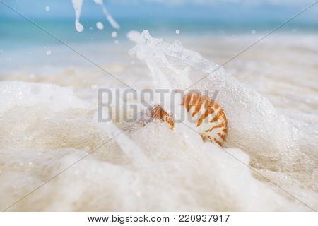 nautilus sea shell in sea wave on golden sand beach with seascape, live action
