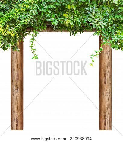 Natural plant rest pavilion bower isolated on white background with clipping path