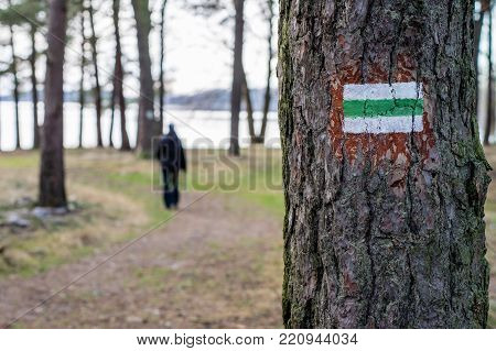 Marking Of The Tourist Route. A Tourist Road Sign On The Bark Of A Pine Tree.