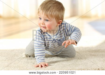 Front view portrait of a distracted baby crawling on a carpet at home