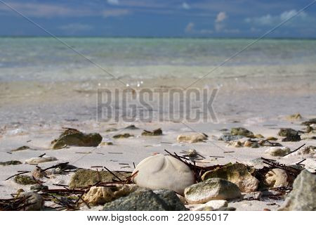 Sea biscuit on a Bahama Beach on the island of Coco Cay.