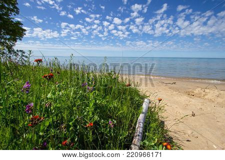 Wildflowers On The Beach Background. Sunny sandy beach with wildflowers in the foreground and a sunny blue sky and water at the horizon. Lake Michigan coast in the Upper Peninsula of Michigan.