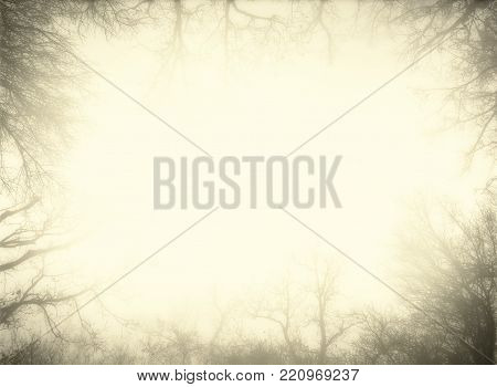 Artistic sepia frame made from bare trees of a misty forest. Contains wide empty area for text.