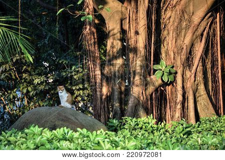 A cat sitting on the stone next the banyan tree.