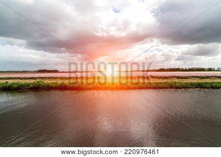 Beautiful sunset above the colorful tulip field