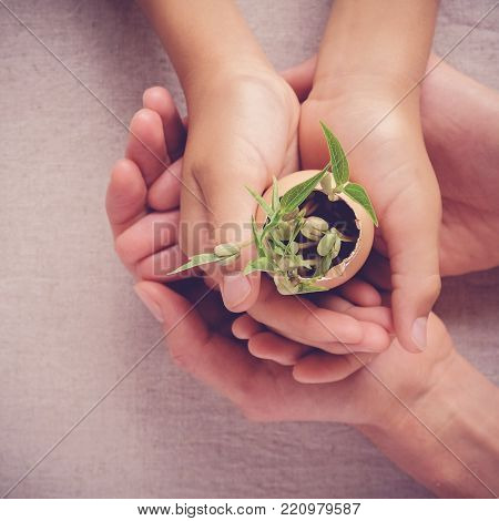 adult and child hands holding seedling plants in eggshells, eco gardening,  montessori, education, social responsibility concept