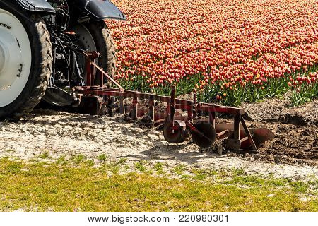 Close view on the tractor harrowing the tulip field