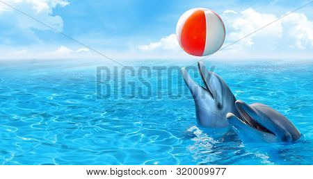 Bottlenose Dolphins Playing Beach Ball In The Ocean