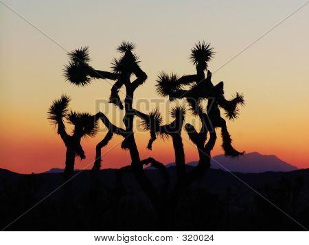 Dancing_trees