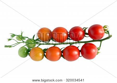 Branch Of Cherry Tomatoes With Ripe, Unripe And Green Fruits, Isolated On White, Top View