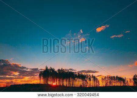 Sunset Sunrise In Pine Forest. Sun Sunshine In Sunny Coniferous Forest. Sunlight Shine Through Woods