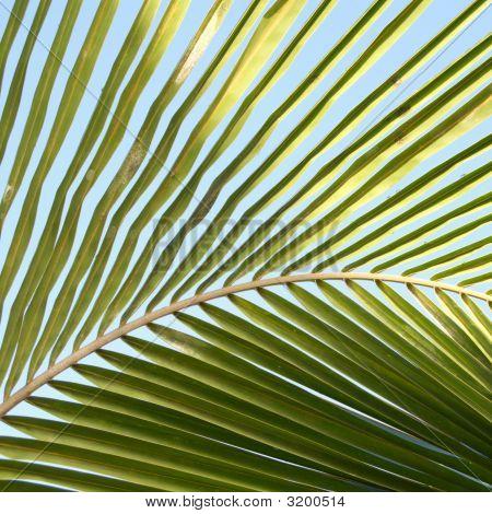 Palm Detail