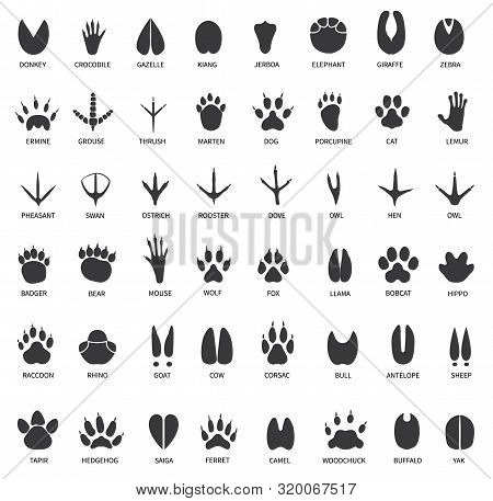 Animal Tracks. Footprints Of Swan, Llama And Donkey, Cat. Owl, Dog And Mouse, Dove And Zebra Paw Pri