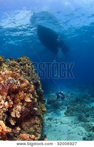 Scuba Diver Next To A Coral Wall