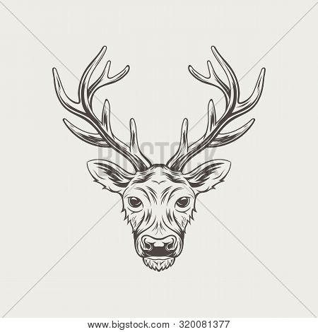 Deer Head Isolated On White Background Vector Illustration