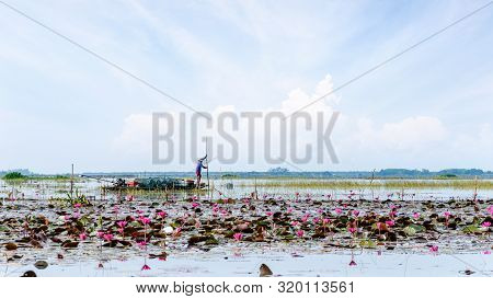 Local Fisherman Are Preparing Fish Traps On A Boat In A Lake With Many Red Lotus Flowers, Lifestyle