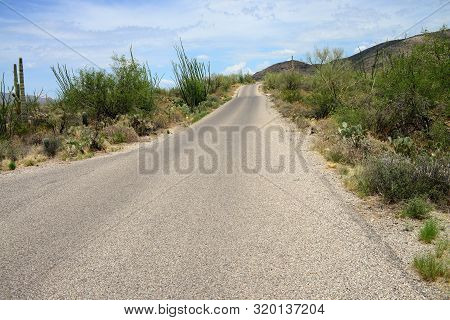 Road Rincon Mountains In The Sonora Desert In Central Arizona Usa