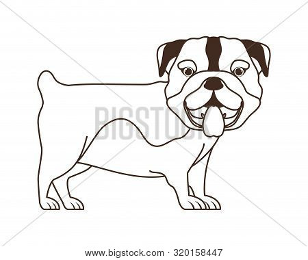 Silhouette Of Cute Bulldog Ingles Dog On White Background Vector Illustration Design