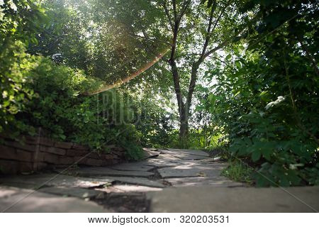 Stone Path Between Trees For Walking And Relaxing In The Park On A Sunny Summer Day
