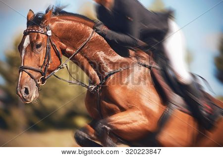 A Bay Horse In Horse Gear With A Rider In The Saddle Makes A High Fast Jump Against The Background O