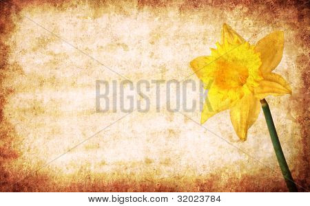 Yellow Spring Narcissus On Grunge Background